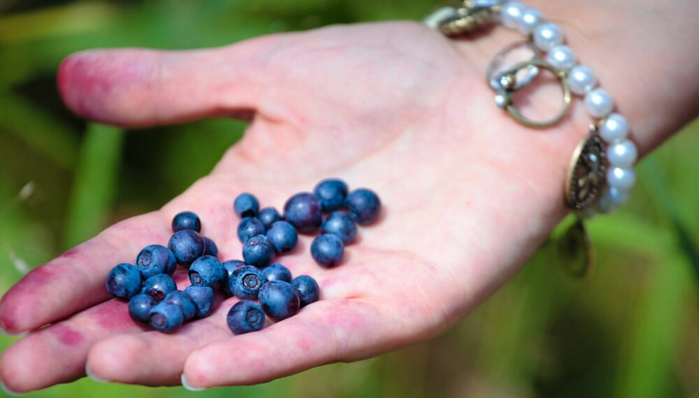 SUNT: Bær er noe av det aller sunneste du kan spise.