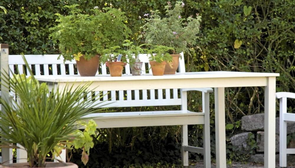 VÅRRENGJØRING HAGEMØBLER: Er man heldig holder det med å vaske tremøblene om våren, men det kan også kreves at man må påføre et nytt strøk maling eller olje.