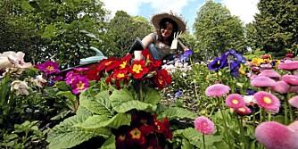 VEDLIKEHOLDSFRI: Med en lettstelt eller vedlikeholdsfri hage, har du tid til annet!