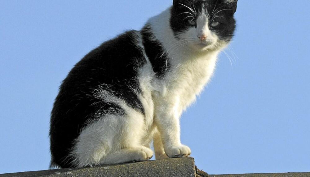 KATTEPROBLEMER: Katter som gjør fra seg er et problem i naboforhold. Rådet fra fagfolk er å snakke med katteeieren og løse det på en fredelig måte.