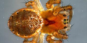 """UØNSKEDE GJESTER: Dette er et av småkrypene du kan mest sannsynlig drar inn sammen med juletreet.  FOTO: <a href=""""http://www.flickr.com/photos/vitenskapsmuseet/8247250332/in/set-72157632177394456"""">vitenskapsmuseet</a> på Flicker.com. Noen <a href=""""http://creativecommons.org/licenses/by/2.0/deed.en_GB"""">rettigheter</a> reservert."""
