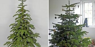 KUNSTIG ELLER NATURLIG: Skal juletreet være kunstig eller naturlig? Valget er ditt. Det kunstige til venstre, forresten.