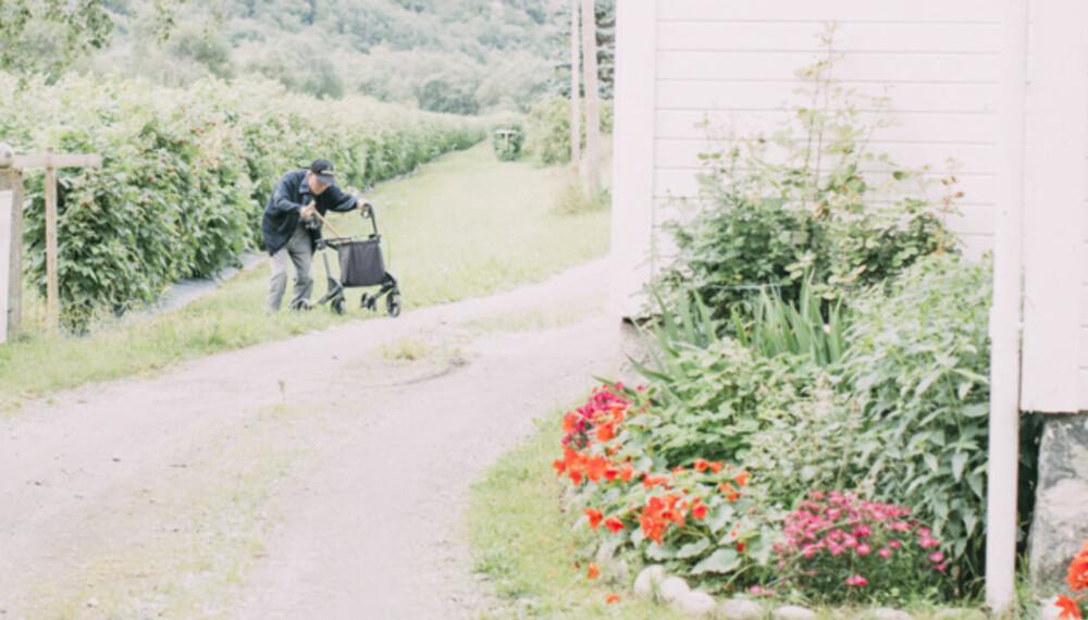 SAKNET: - Me rakk nokre månader med sameksistens på garden, kaffikoppar med doble sukkerbitar og rullatorspasering til pumpehuset.