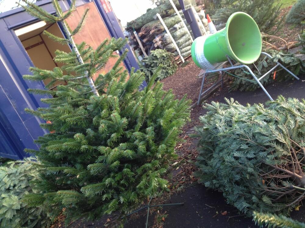SJEKKLISTE: Det er en del ting du burde sjekke før du tar juletreet med hjem. FOTO: Trine Jensen