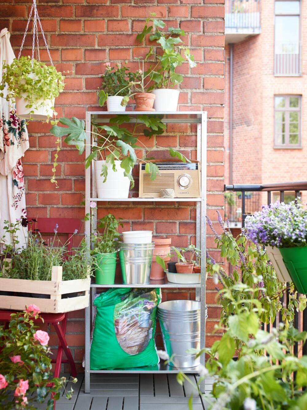 BEGREP I TIDEN: Urban gardening blir et begrep som blir på alles lepper fremover. Nå vil vi ha det grønt rundt oss - også i byen. Hyllen er fra Ikea.