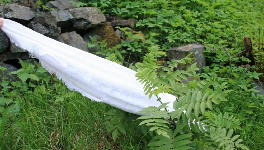 FLÅTT FORSKNINGSPROSJEKT: Er du nysgjerrig på om det finnes flått i hagen din, kan du trekke et hvitt tøystykke over gress og vegetasjon og sjekke om det har festet seg flått på det.