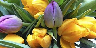 TULIPANER TIL PÅSKE: Akkurat nå kan du få tak i rimelige og vakre tulipaner som pynter opp hjemme.