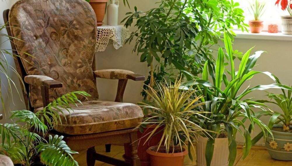 GRØNT HJØRNE: Din grønne oase blir fort ørkenlandskap mens du nyter feriedagene hjemmefra.
