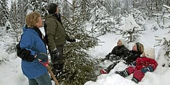 JULETREHUGST: Selvhugst av juletre er en hyggelig familieaktivitet, og lar man treet ta veien innom den kjølige kjelleren før pynting vil det holde seg til 13. dag.