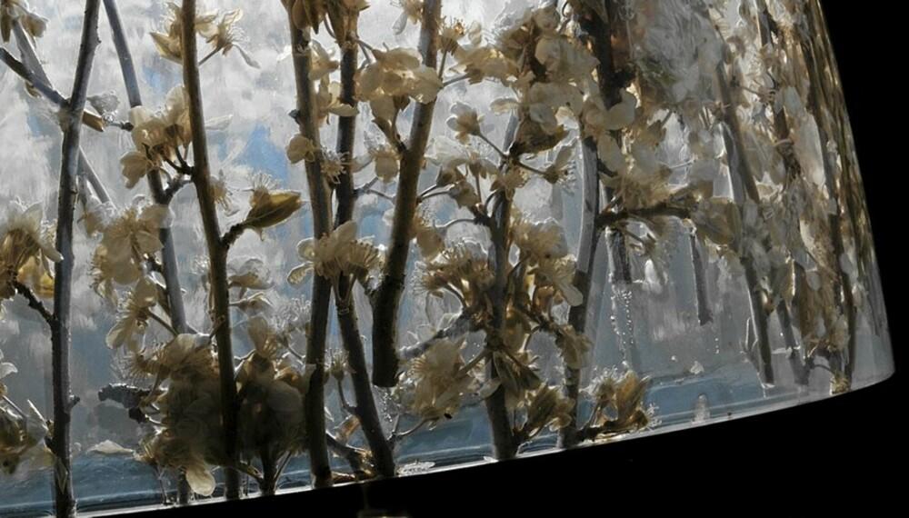 VÅRLYS: Innkapslede fra et knoppskytende kirsebærtre utgjør dekoren i one-off-serien «Fatso» fra Louis Poulsen.