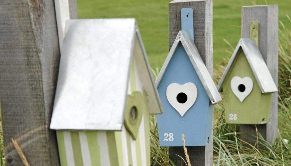 SHABBY CHIC: Romantiske trehus i fuglegaten. Det stripete huset kr 289, det blå og det grønne kr 349. Boligfryd.no