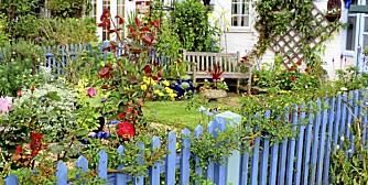 BLOMSTRER: Du vil vel ikke bli møtt av en vissen hage når du kommer hjem fra ferie? Følg disse rådene for å unngå det.