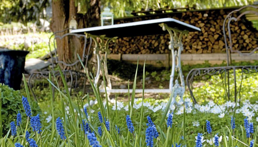 VÅRDRØM. Det nærmer seg full vårblomstring i hagen. Men først må du rydde opp ved å fjerne døde planterester, løv og annet som kommer frem etter snøsmeltingen.
