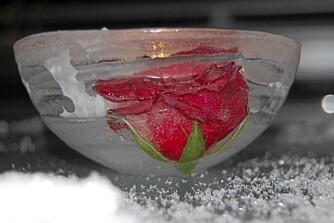 ROSELYKT. Fest rosen i bunnen når du fryser den. Sett islykten i fryseren når varmegradene kommer og ta den frem igjen neste gang det blir kaldt.