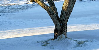 NY TID: Om høsten bør du forberede hagen på frost og snø, det er ikke så mye som skal til.