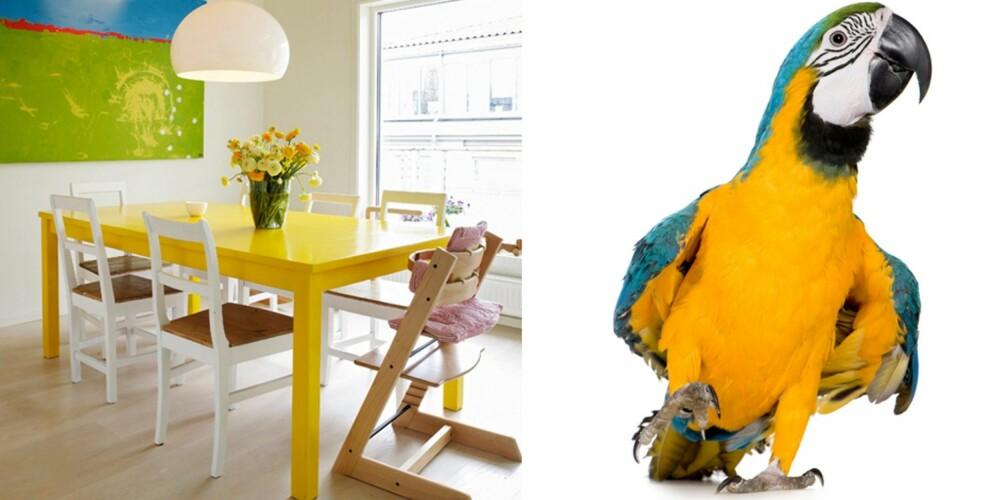 STERKE FARGEDRYPP: Fargekombinasjonen i spisekroken ligner fjærpryden til en papegøye. Sterke signalfarger egner seg best til detaljene og trenger å balanseres med nøytrale flater, slik som her. Naturen er god inspirasjon for fargesammensetninger, for akkurat det gjør den ikke feil.