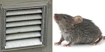 MUSEÅPNING: Syv millimeter er alt hva en mus trenger for å komme inn i hytta di, og lufteluker er en av favorittstedene.