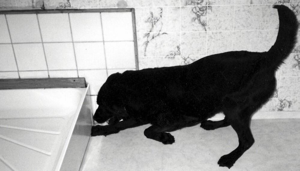 HUND ETTER STOKKMAUR: Hunden Molly er trent opp til blant annet å finne stokkmaur, og har markerer den et treff.