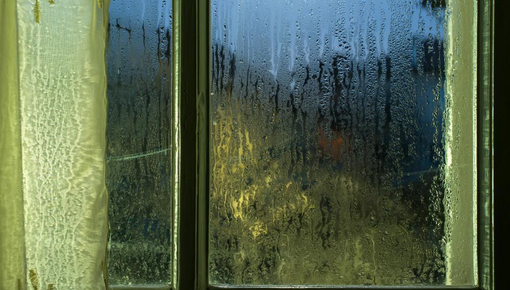 PUNKTERT VINDU: Vedvarende kondens på vinduer kan bety at den generelle luftfuktigheten er for høy, noe som kan gi fuktskader i boligen. Foto: FOTO: Colourbox.com