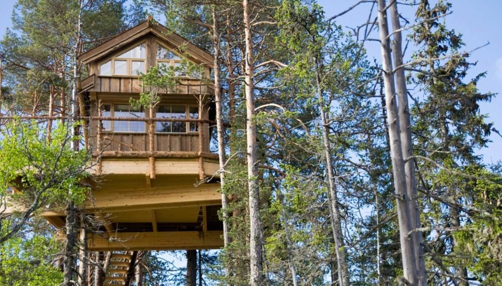 UTSIKT: I Himmelhytta bor du oppe i trekronene blant ekorn og hakkespett, med utsikt over ekte norsk skogsvillmark.