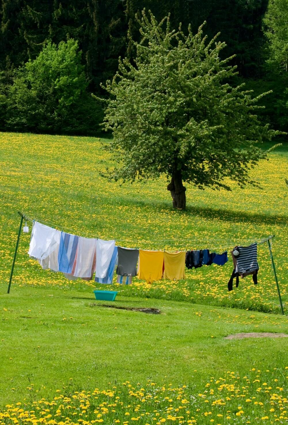 IKKE TØRK KLÆRNE UTE: Pollenkorn kan feste seg til klærne når de henger ute. Derfor bør du ta klestørken innendørs i pollensesongen.