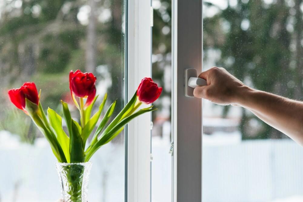 LUFT OM NATTEN: Unngå lufting om dagen, da er pollenutslippet størst. Luft på kveldstid eller om natten, men også da med måte.