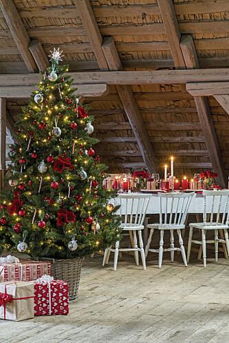 BEGYNNER TIDLIG: Mange tar juletreet inn tidlig i desember og kaster det ut allerede i romjulen.