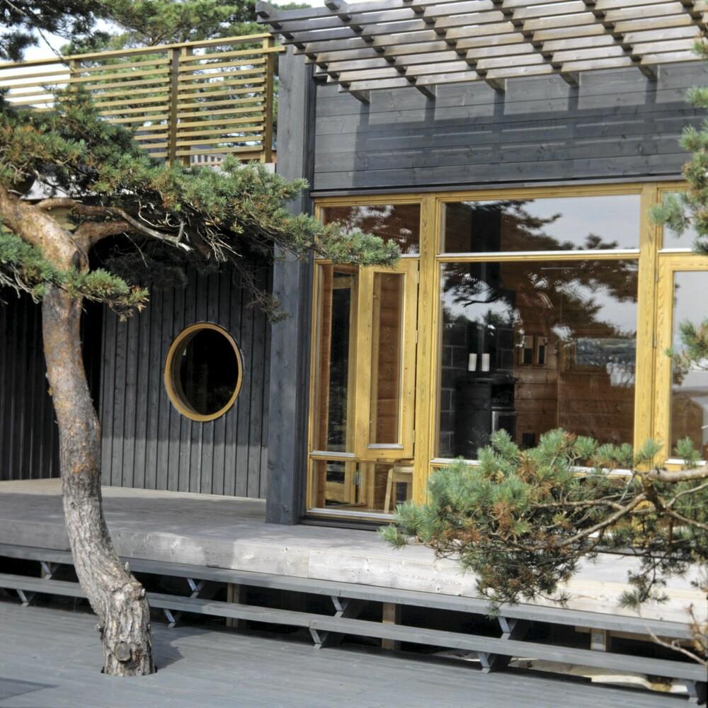 NATURNÆR: Hytta har treplattinger i to nivå. De krokete, vakre trærne får fortsette å gro, akkurat der de sto før hytta ble reist.