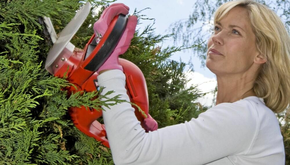 IRRITASJON: Naboens hekk er til stor irritasjon for mange, særlig når vokser så tett at den skygger for sol og utsikt.