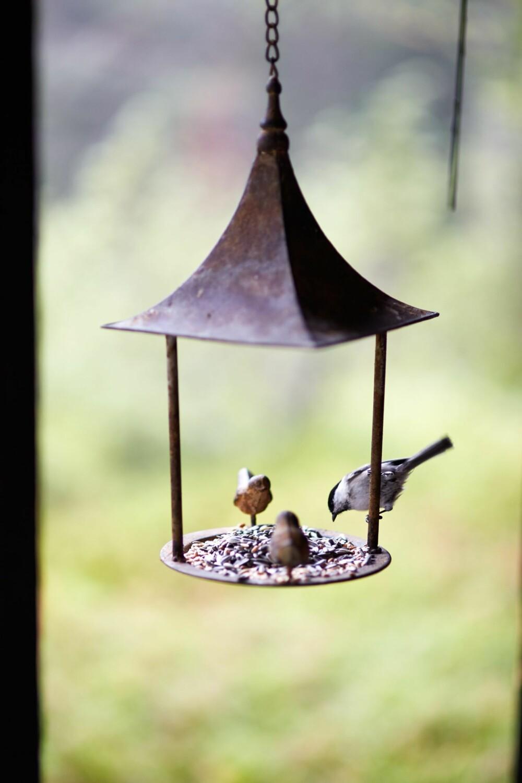 GODT BESØKT: Inger er opptatt av dyreliv og fugleliv. Hun legger ut frø hele året. Meisefamilien er blant de ivrigste på brettet.