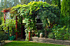 klatreplanter skygge