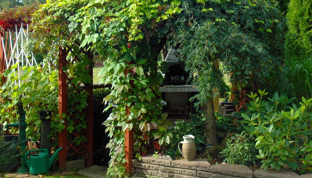 KLATREPLANTER PÅ TERRASSEN: Mange drømmer om en takterrasse dekket av vakre slyng- og klatreplanter.