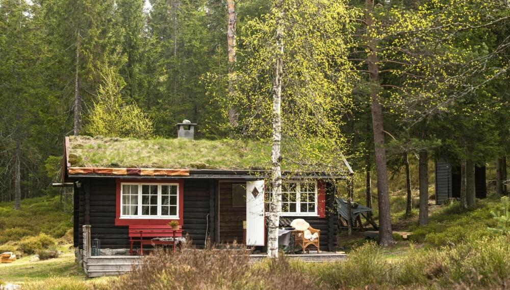 PÅ PLASS: Hytta står på en  gammel, nedlagt finneplass som det så vidt går an å se spor av.