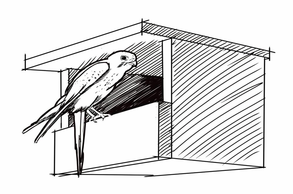 ÅPEN KASSE: Dette er kasser der andre fuglearter kan slå seg ned. Tårnfalk, linerle, tårnseiler og fossekall er fugler som foretrekker denne varianten.