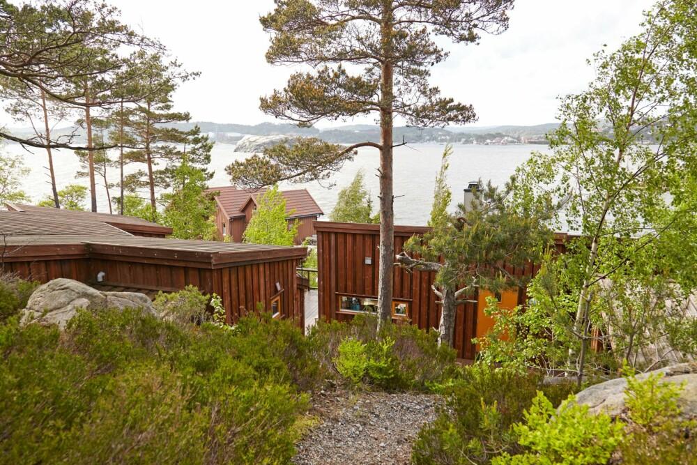 NATURTOMT: Arkitekten har formet hytta i to deler med spennende vinkler som danner et lunt tun. At takene skrår ned, gjør at man ser mer av havet fra adkomsten ovenfra.