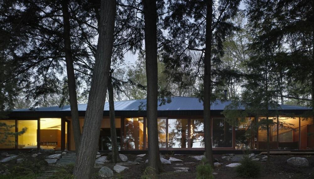 YDMYKHET: Hytta er forsiktig plassert ned blant furu- og grantrær.