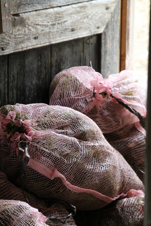 SANKE MOSE: Vi trenger ca. 1500 kilo nyplukket mose til et bygg på ca. 40 kvadratmeter, har Anders Dalseg regnet ut. Mosen inneholder 90 prosent vann, så den er ganske tung. Husk å få tillatelse fra grunneieren før du sanker mose.