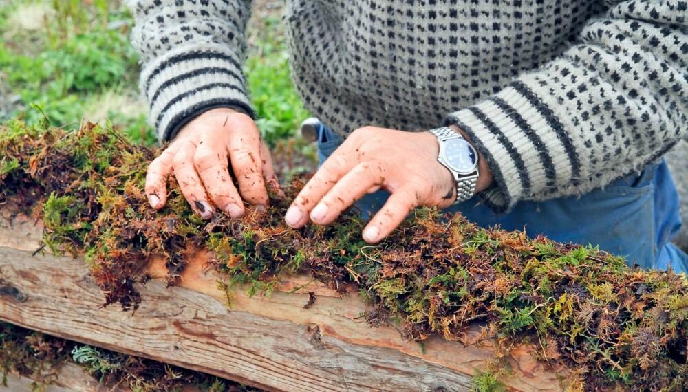 VARIG: Å isolere med mose har lange tradisjoner her i Norge. Mose er antiseptisk, den transporterer fuktigheten vekk fra treverket og ikke minst, det er et naturlig produkt som kan vare i hundrevis av år.