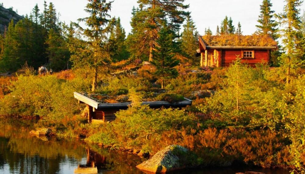VINNERHYTTA: Hytta i Fyresdal ligger i Telemark vakkert til ved et tjern, med multemyr utenfor hytteveggen.