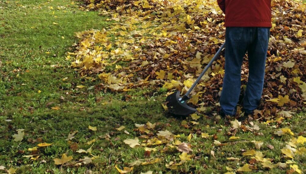 HAGEARBEID: Fjerner du ikke løv forhindrer du luft og lysinnslipp, da blir gressplenen ødelagt. Men du trenger ikke å slite med å rake det vekk.