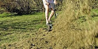 MOSEFJERNING: Mose i plenen kan enten fjernes mekanisk, som her ved hjelp av en mosefjerner, eller ved å gjødsle jevnlig med naturgjødsel (VIKTIG), slik at gresset får mer  vekstkraft og mosen tilsvarende mindre.