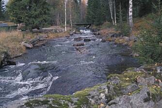 Elver og vann er overflatevann, og dermed utsatt for forurensning