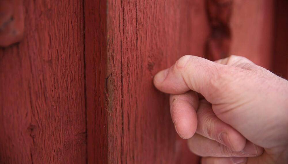 UTVENDIGE VEGGER: Ved å dra neglen over ytterveggen kan du finne tørre områder, bobler eller avflasset maling. Blir det en lys strek er veggen klar for et strøk maling. Følger du opp vedlikeholdet på hytta jevnlig kan du unngå en større jobb senere.