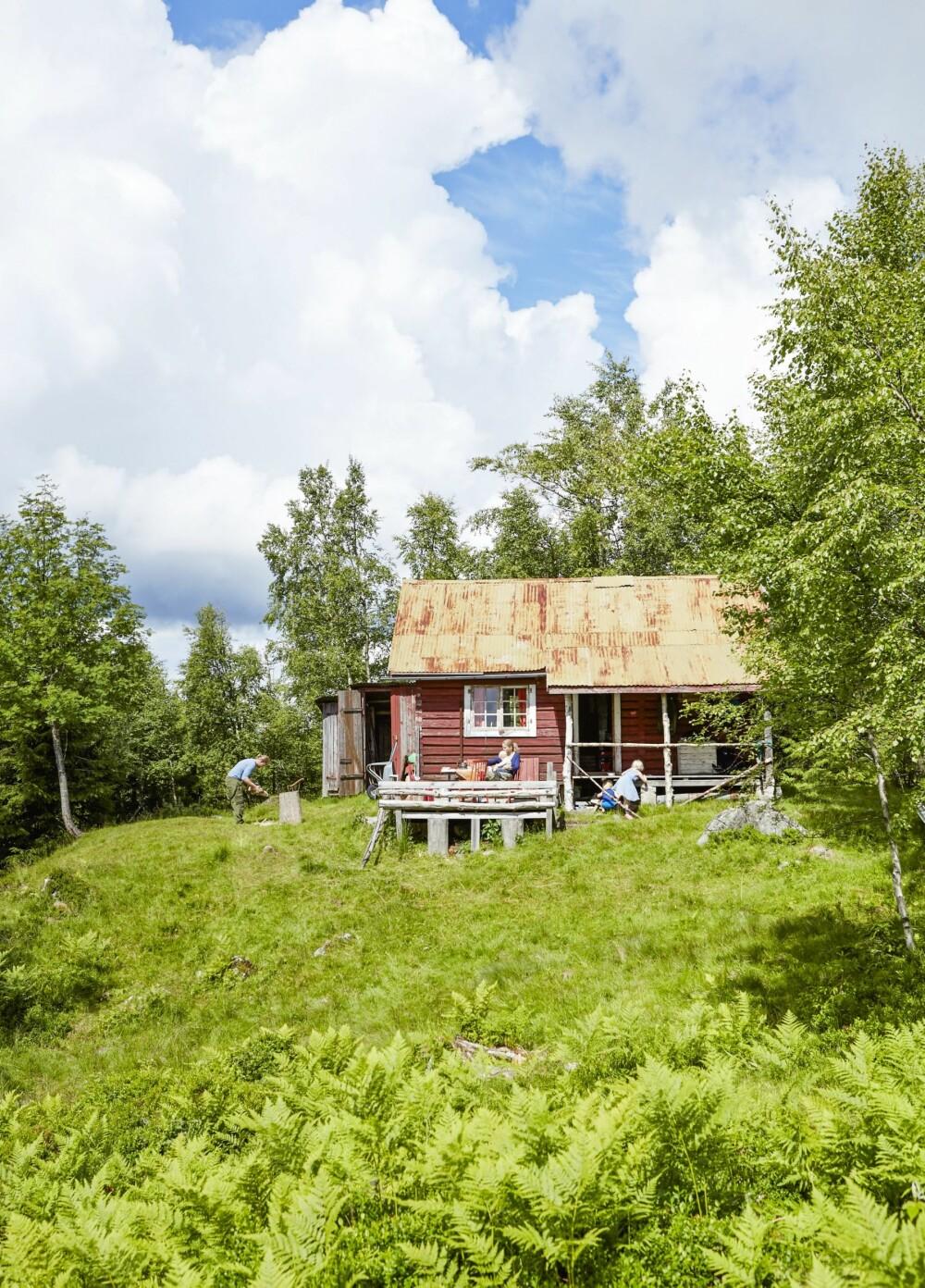 ALENE I SKOGEN: Det er langt til bilvei, tursti og nærmeste hytte. På Gamlevoll er familien Solberg helt for seg selv, og de trives med det. (FOTO: Sveinung Bråthen)