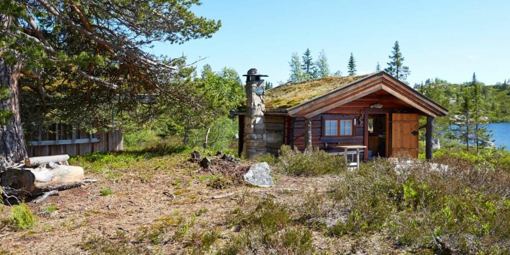 Laftedrøm: Gunhild Momraks hytte ligger vakkert til ved et tjern, med multemyr utenfor veggen. Her står også et anneks som ble bygget året etter. Et lite båthus er plassert i vannkanten og ble laftet opp noen år senere.