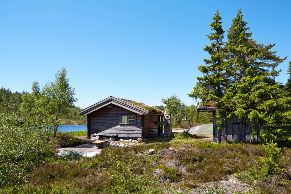 Morgensol: Sørsiden av hytta er vakker i morgensol. Her nytes en kaffekopp i hytteveggen på varme sommerdager.
