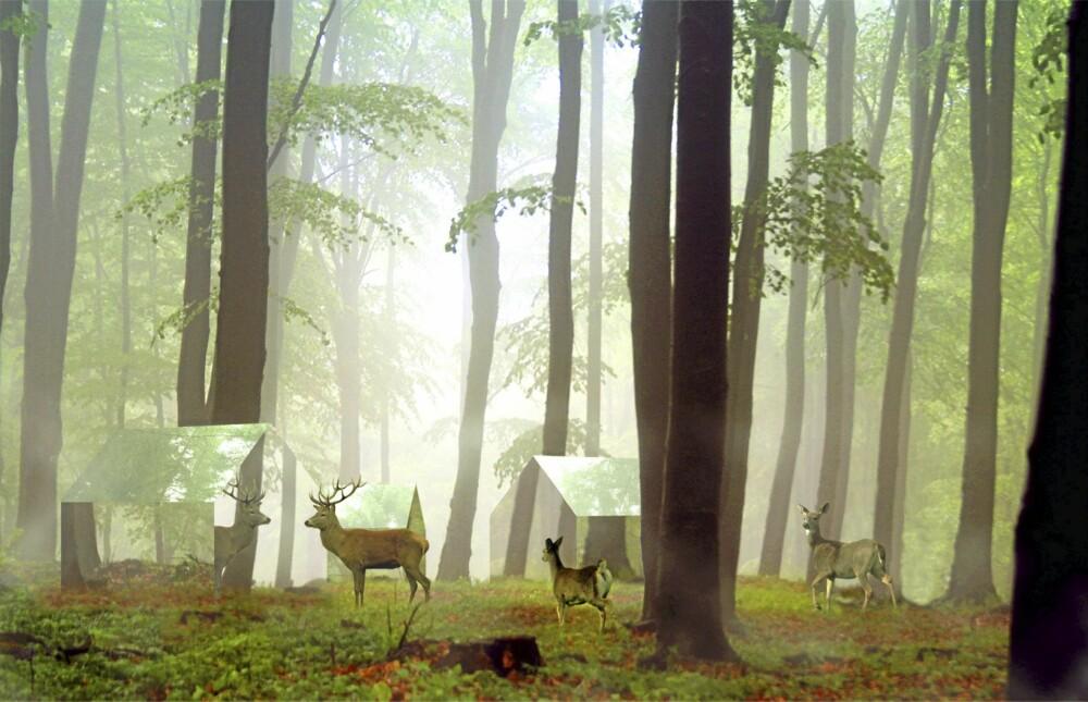 SKOGENS RO: Tanken er at speilkledningen skal gjøre at hyttene glir fullstendig ubemerket inn i naturen og omgivelsene.