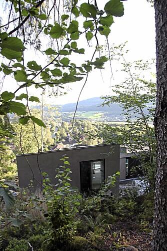 GLØTT I KRATTET: Ovenfra ser vi hvordan huset nesten forsvinner i vegetasjonen.