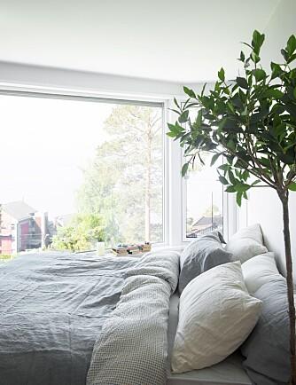 UTSIKT FRA SOVEROMMET: Det er komfortabelt å våkne til en sånn utsikt. Sengetøy og sengeteppe i lin fra eskeinterior.no Eviggrønt oliventre fra bolina.no