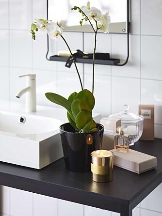 PLANTER PÅ BADET: I tillegg til en rekke grønne planter, liker også orkideen Phalaenopsis seg også godt her, om du vil ha noe med blomster.